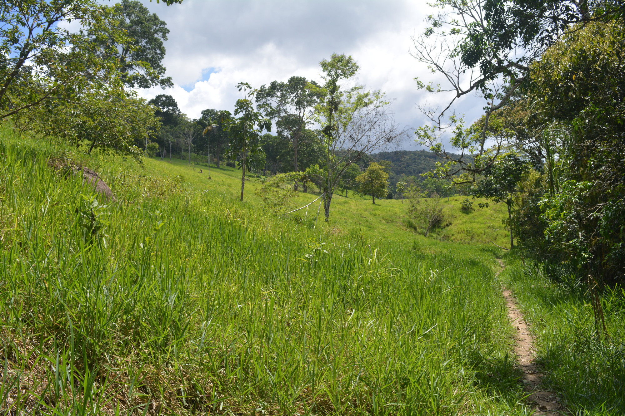 FH4 path view