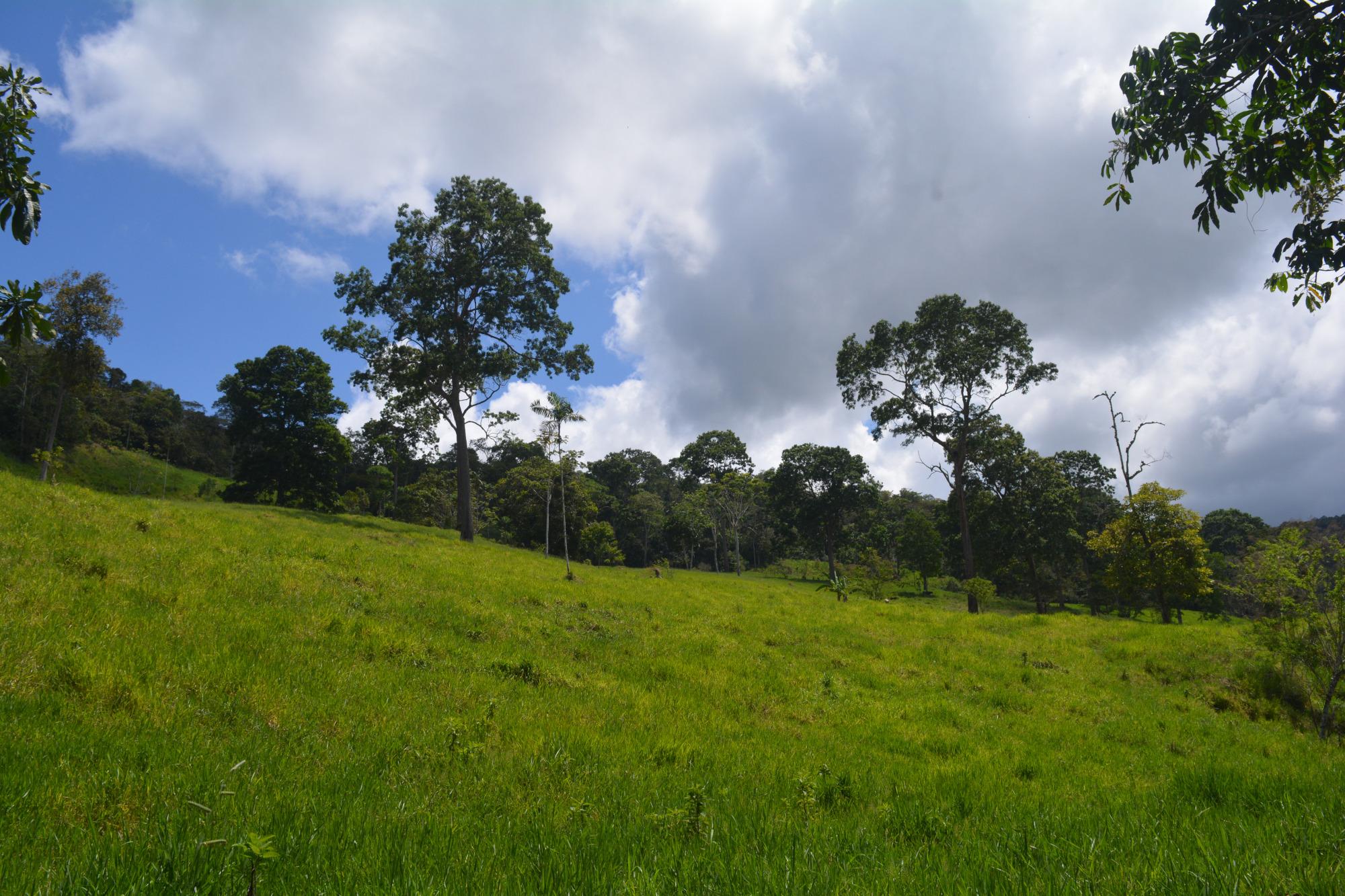 Pasture view, FH4