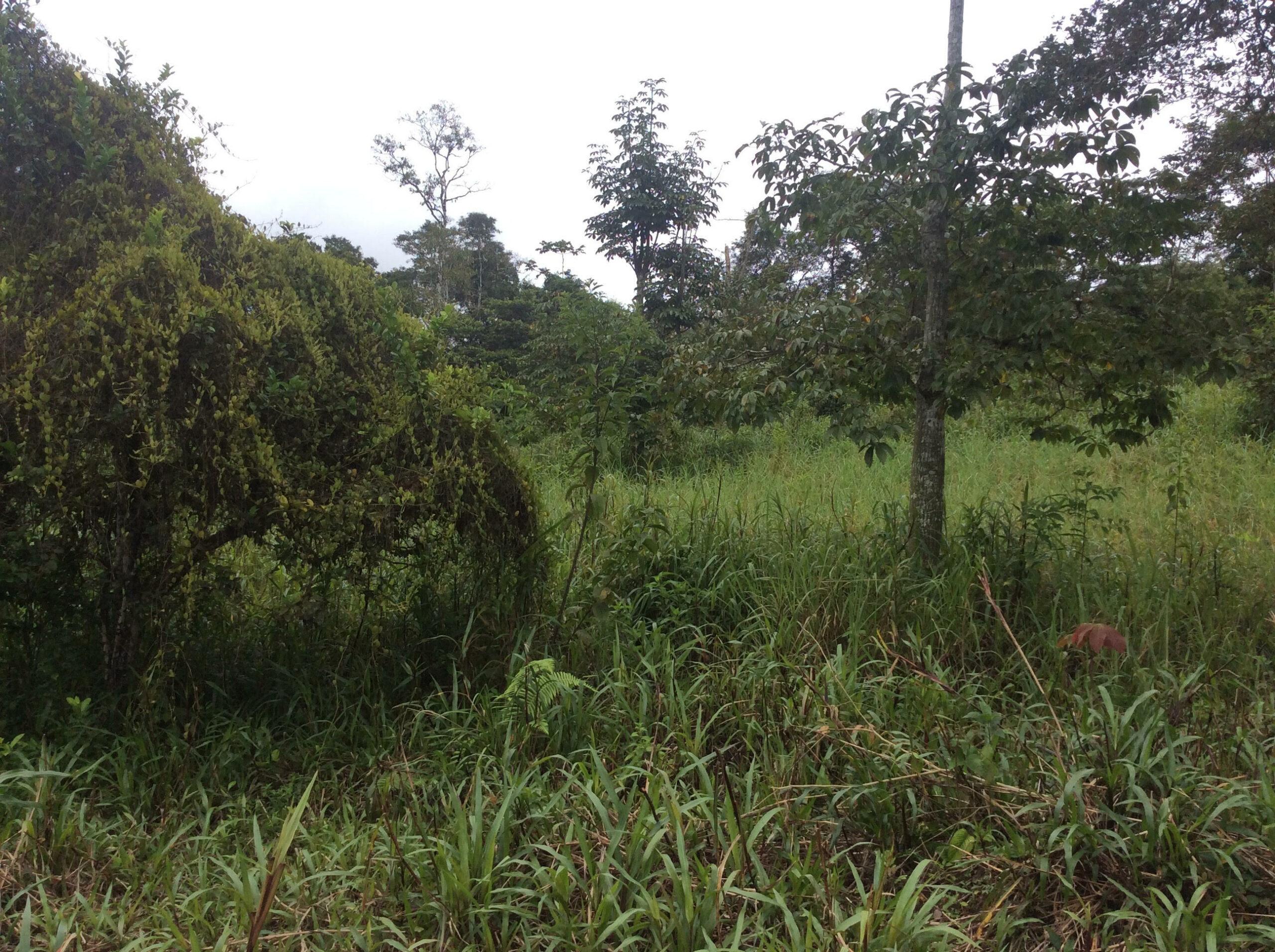 fh10 pasture 2